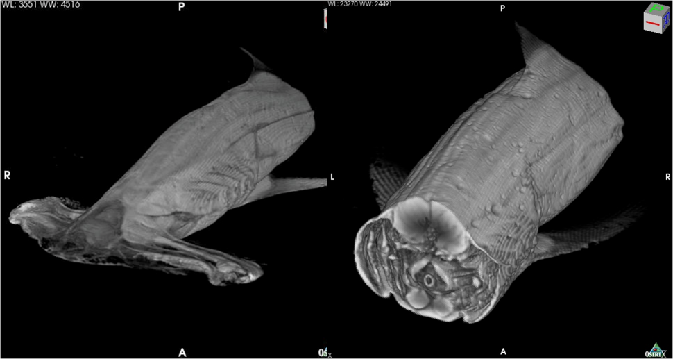 Digital Fish Library
